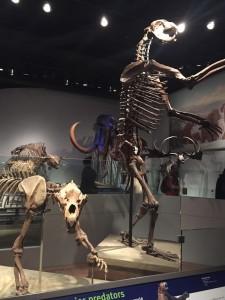 Early bear skeletons