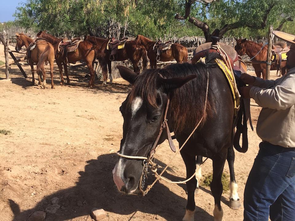 horsebacking-in-cabo2